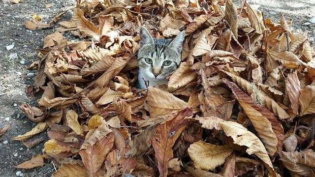 leaves-992206_640